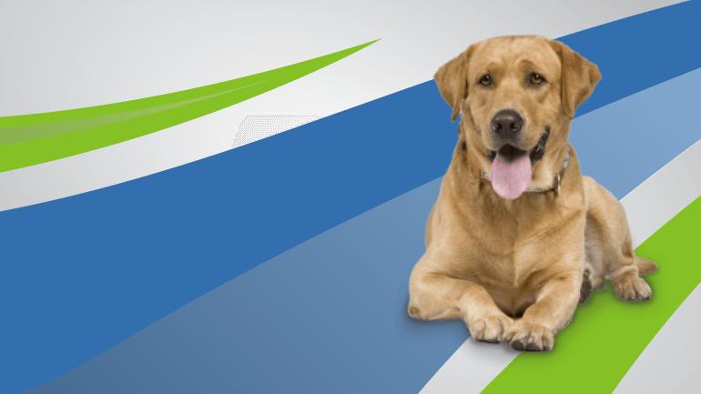 servicos-seguro-animais