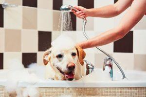 Economizar dinheiro com seu cachorro